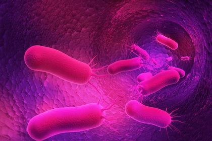 bacterial-genetics-3817111-1.jpg